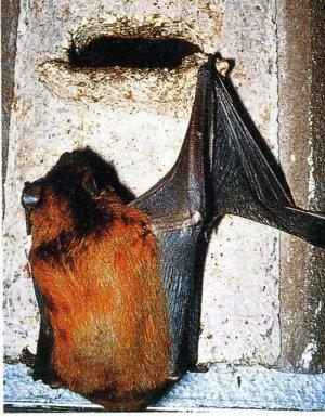 bat inside