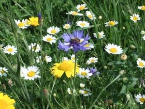 bee meadow 3 resize